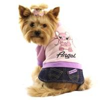 Как ухаживать за одеждой для собак