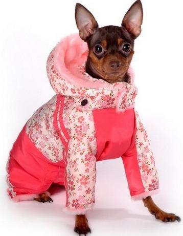 Выбираем теплую одежду для маленьких собак