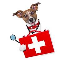служба ветеринарной помощи на дому
