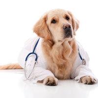 правила содержания ивыгула собак