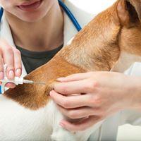 Чипирование ивакцинация животных