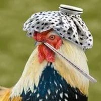 Профилактика гриппа птиц