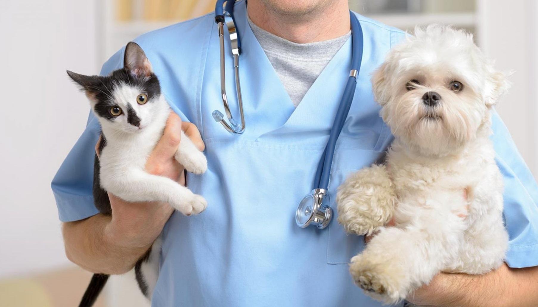 лучший ветеринар